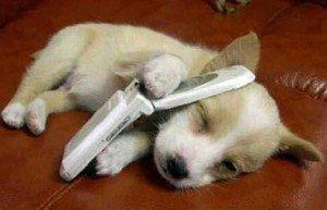 Petit chien avec téléphone