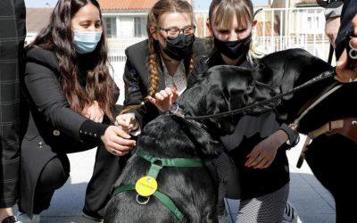 Les 2e années de BTS SAM offrent un film aux Chiens guides d'aveugles